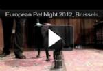 8 european pet night
