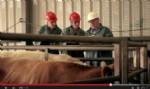 FVO seguridad alimentaria y sanidad animal